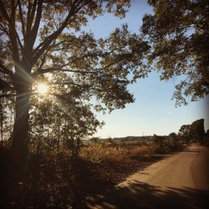 moving forward taking steps goals and dreams tree lined country road sunset