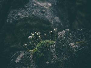 blooming-rock-bloomin-ash