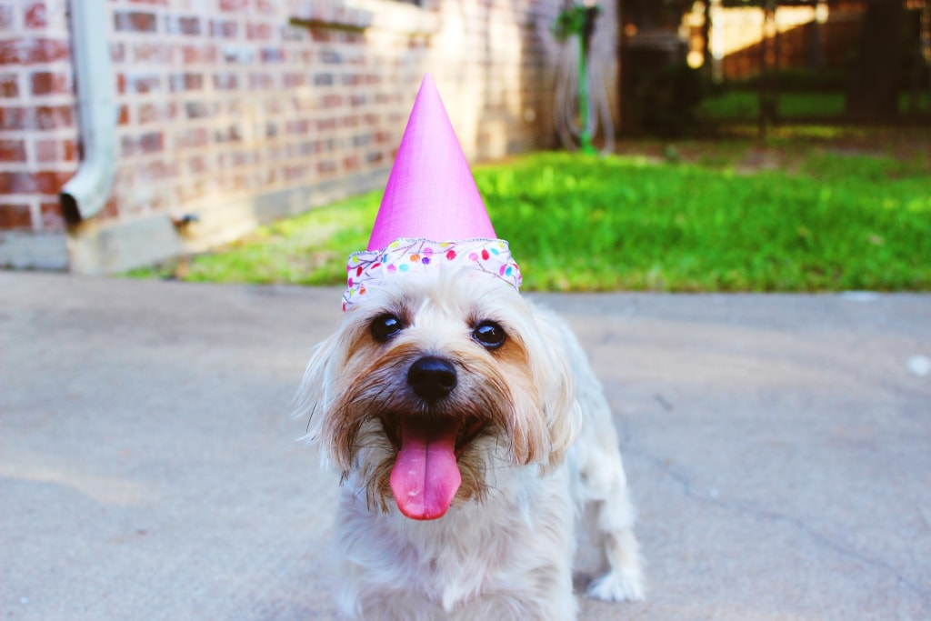 one day at a time dog birthday sober