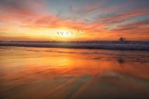 birds flying sunset